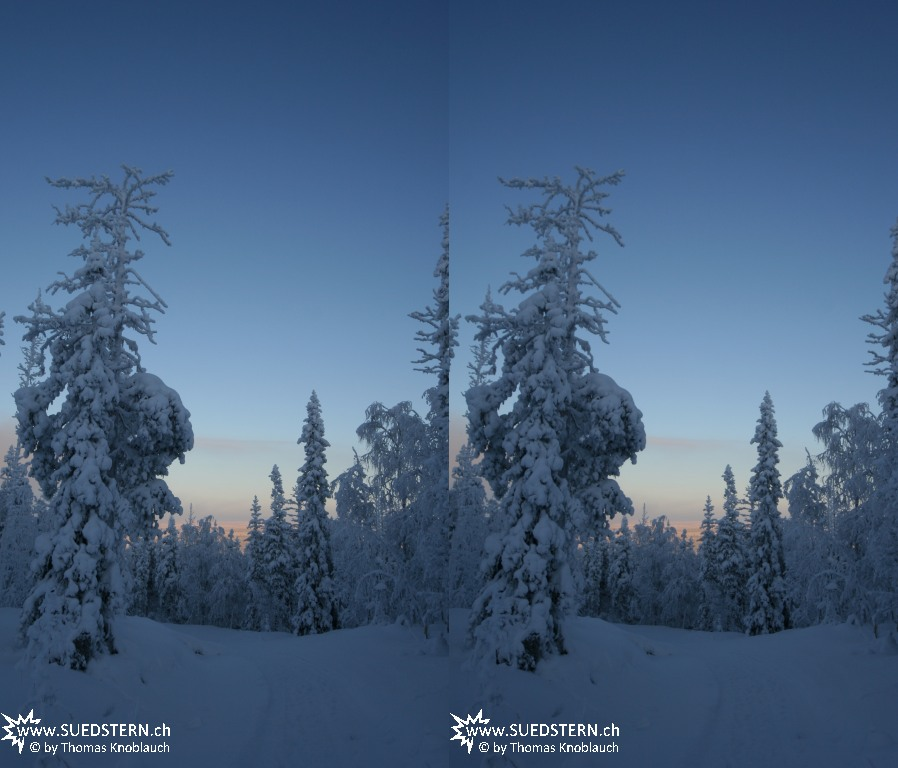 2012-02-01 - Woods at Levi Hill, Finnland 3D